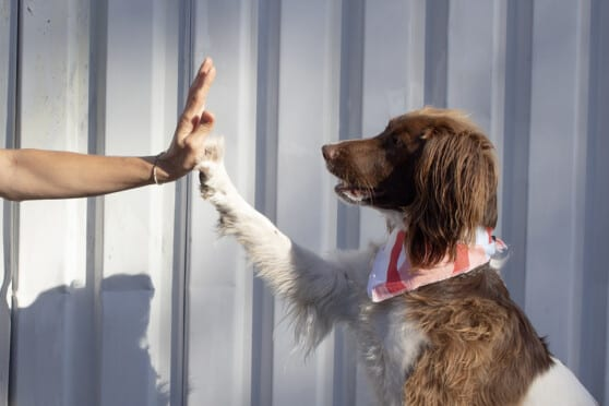 a dog high fives a human - good boy!