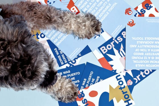 Boris & Horton brand post cards with a cute dog